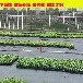 吉林白山抚松抗紫外线防草布全新料防草布园艺地布推广与使用