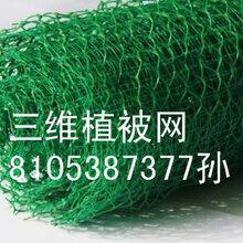 安徽专业生产三维植被网厂家现货销售欢迎采购
