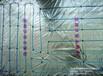 青岛罗斯纳德碳纤维电地暖加盟电地暖发热线缆