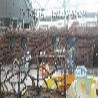 湖南塑石假山假树木纹树藤护栏施工队伍公司师傅
