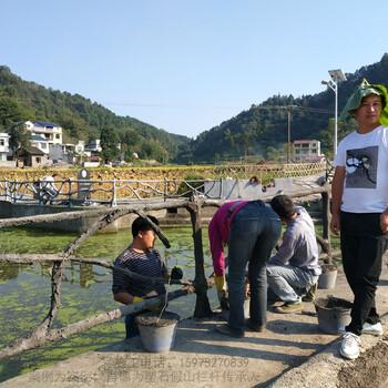 仿木树藤栏杆施工大型瀑布塑石假山施工水泥假山施工