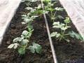 水肥一体化灌溉设备图片