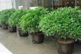綠植租賃、植物租賃、花卉租擺、多肉盆栽租售
