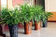 綠植盆栽銷售,室內綠植租擺免費設計,運輸,擺放更換