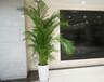 寫字樓酒店展會綠植租賃、盆栽銷售、別墅綠化、景觀工程