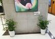 小園丁園藝花卉租賃、婚禮鮮花綠植裝飾、開業花籃