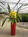 小園丁-綠植租擺、室內外花卉綠植租售、開業花籃
