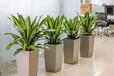 蘇州綠植租擺、室內外綠植盆栽租賃、酒店寫字樓花卉租售