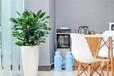 蘇州寫字樓、酒店、商場植物租賃,花卉盆栽綠植出租