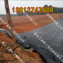 湘潭HDPE防渗膜(欢迎您