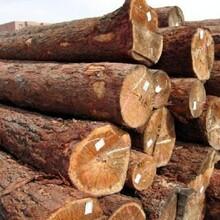 木材报关进口木材一般流程