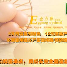 蛋鸡输卵管炎的预防ji治疗方法