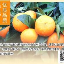 广西武鸣沃柑价格、火龙果价格,询问广西山山秀果