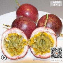 年货新鲜水果,广西百香果批发,沃柑批发