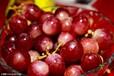 缅甸新世界集团158876OO989红葡萄