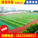 江门透气型塑胶跑道江门透气型跑道价格江门透气型跑道厂家