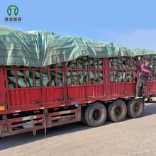 新LC7.5轻集料混凝土生产复合环保建材标准图片