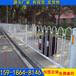 广州厂家直销花坛绿化带围栏深圳城市道路护栏
