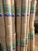 包塑電焊網價格