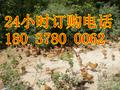 河南旺合干林下散养原生态土鸡月子鸡跑山鸡农家土鸡草鸡小笨鸡图片