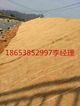 四方建材供应椰丝毯边坡绿化护理的新材料图片