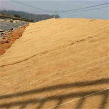 昌都椰絲毯泰安四方建材有限公司供應圖片