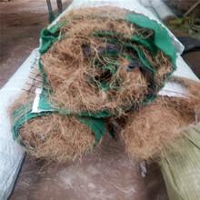 四方建材生产椰丝毯,生态护坡环保毯图片