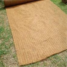 边坡绿化护坡材料生态椰丝毯四方建材低价促销质量可靠图片
