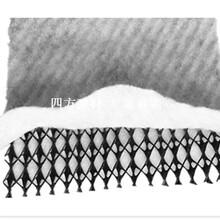 泰安四方建材欢迎咨询选购定西三维复合排水网图片