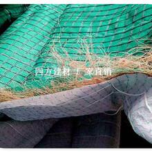 长期低价供应广东椰丝毯、2.15m×30植草毯全国销售图片