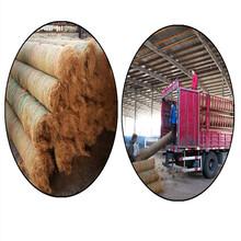 椰丝毯采购批发市场优质椰丝毯价格品牌/厂商图片