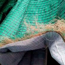 蘭州椰絲毯公司實業公司圖片