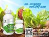 葉菜類專用水溶肥田小二葉易健廠家批發