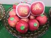 哪里的蘋果口感最好吃?