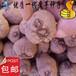 一代魔芋种子、花魔芋种子、脱毒魔芋种子批发20-50克