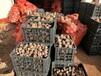 魔芋种子批发价格