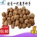 优质云南魔芋种子批发,购买即享免费技术指导、免费送货上门
