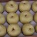 砀山新鲜酥梨_砀山土特产砀山酥梨产地批发价格