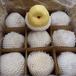 安徽砀山特产酥梨价格_砀山酥梨之乡批发砀山梨