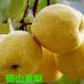 供应2018安徽砀山酥梨著名品牌,?#30475;?#36136;优,批发砀山酥梨