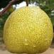 砀山酥梨基地价格_砀山酥梨产地批发多少钱