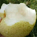 砀山梨代办_力求打造全国水果加工大县_安徽砀山梨代办