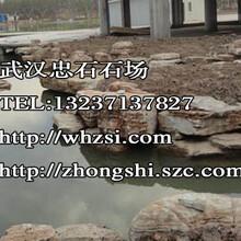 湖北奇石龜紋石價格-武漢做假山石品種樣式圖片
