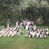 草坪婚礼哪里好原始部落首选