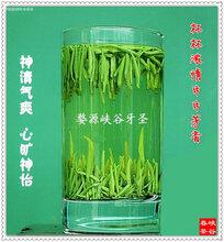 江西名茶峡谷春婺源深山牙圣绿茶500g配牛皮纸手提袋图片