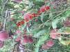10月份成熟的桃品种好