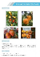 晚熟桃套什么袋子最好早熟桃子最新品种