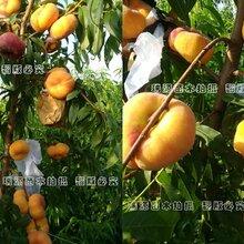 天然杂交品种桃品种咋取名老品种甜桃图片