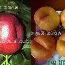 仙桃目前什么桃子品种好_仙桃优惠价格