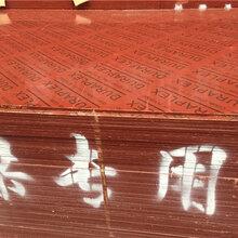 盘锦竹胶板图片